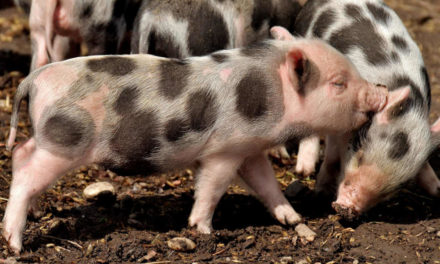 Nutztiere contra Haustiere – Ist das nicht rassistisch?