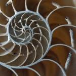 Natürliche Hilfe bei Osteoporose