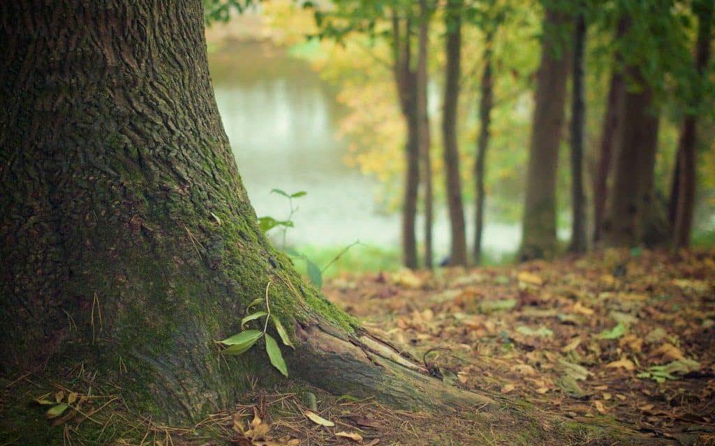 Über eine Reise in Richtung unbekannt, Ortswechsel und den Fluss des Lebens
