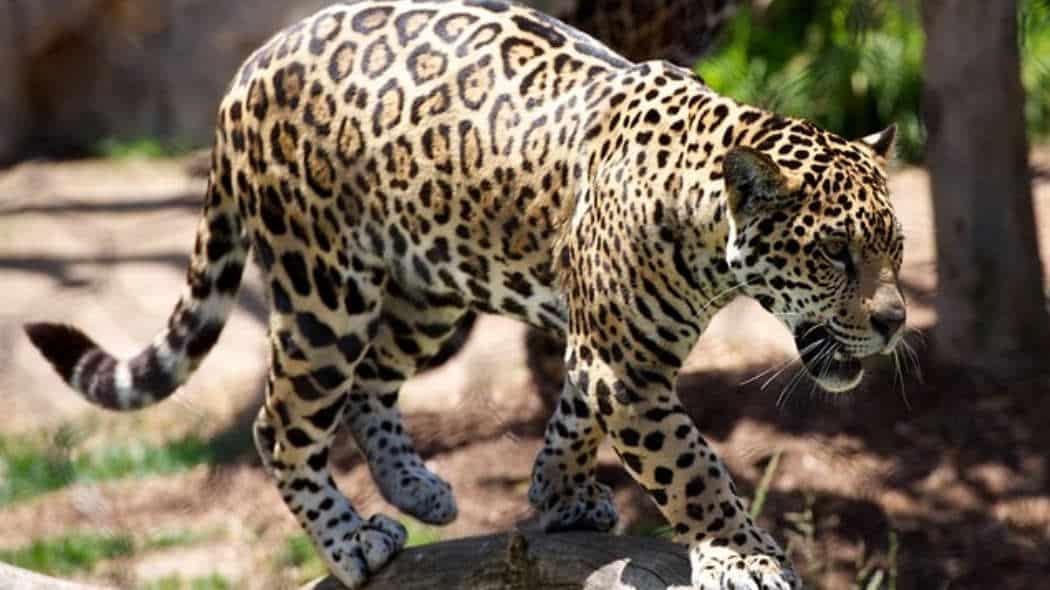 """Buchempfehlung: """"Werde ein geschmeidiger Leopard"""" von Kelly Starrett"""