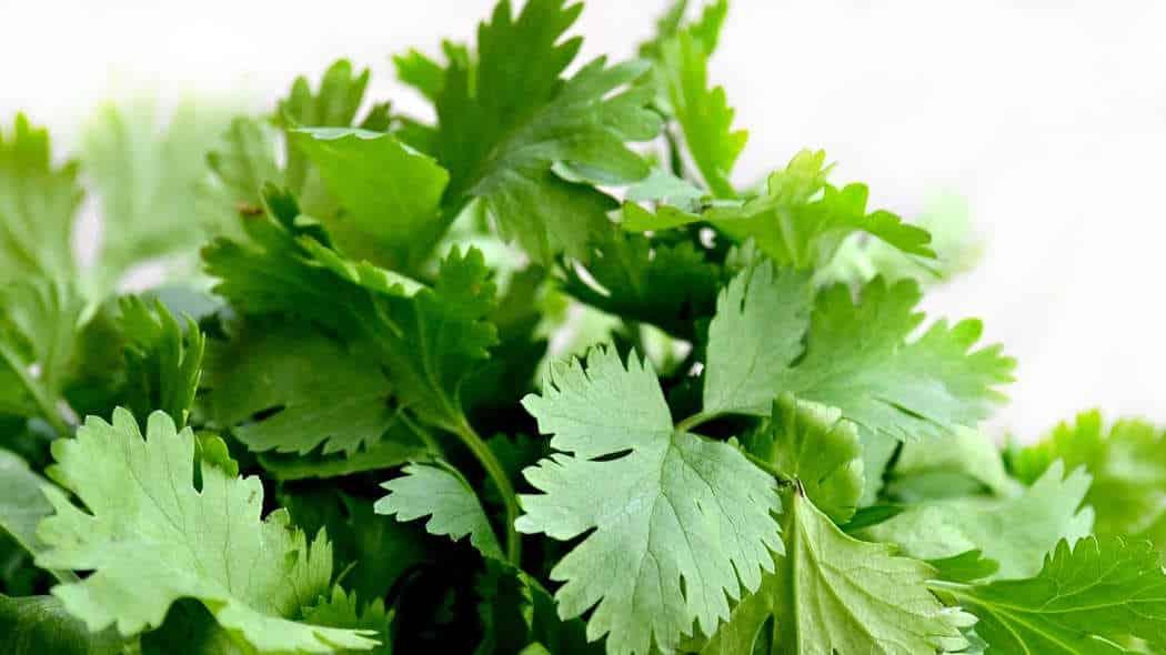 Pflanzengrün (Chlorophyll) als Übermittler von Lebensenergie Teil 3