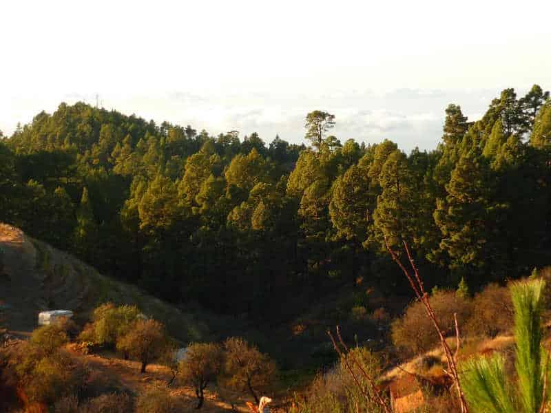Blick in den Bergen von La Palma