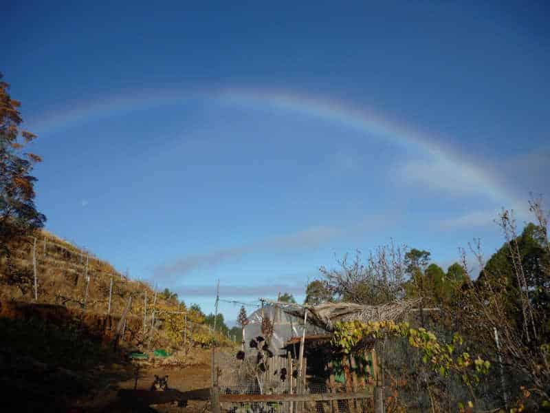 Begrüßung am Morgen Regenbogen