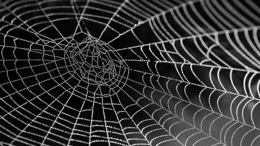 Bindegewebe-und-Faszien-als-Schluessel-fuer-Gesundheit - Spinnennetz