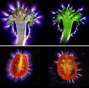 Biophotonen in Nahrung
